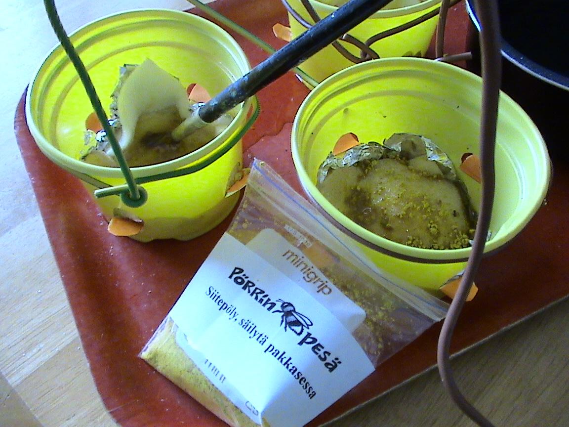 Kimalaisten ja mehiläisten ruokintaa!