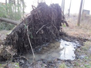 Kaatunut puu suossa